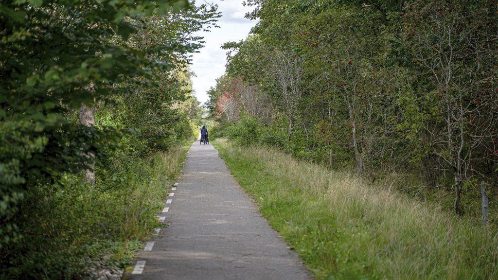Asfalteret cykelsti gennem skoven med ladcykel i baggrunden